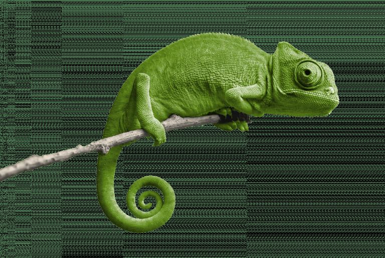 04_kameleon