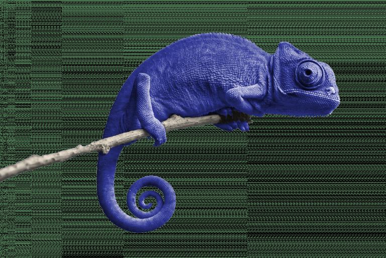 05_kameleon