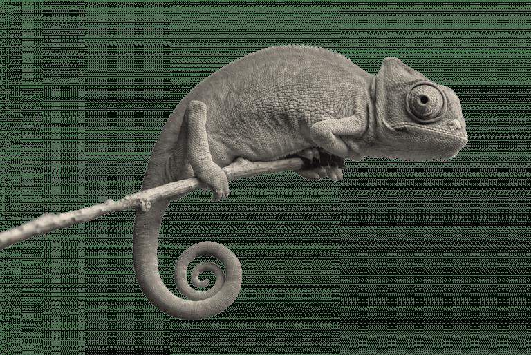 06_kameleon
