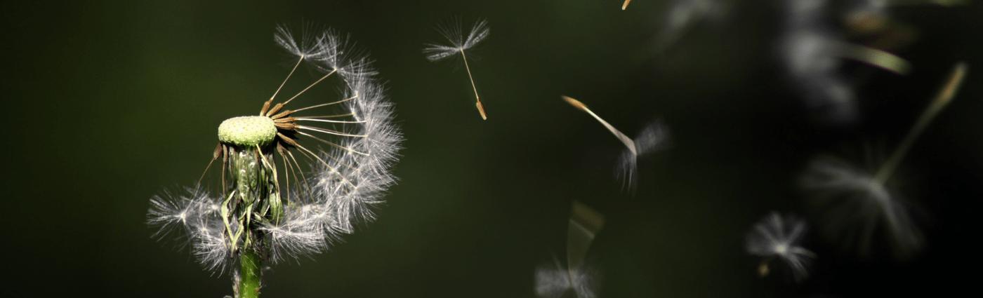 dandelion light